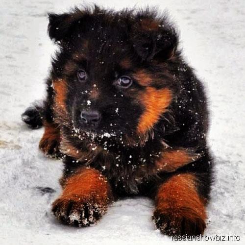 Собака Анны Седоковой