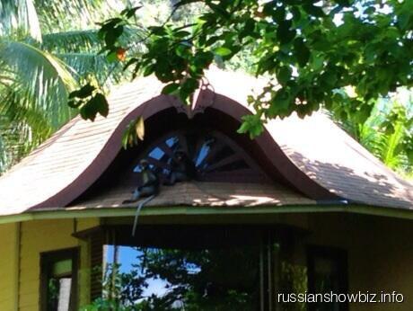 Змеи на крыше дома Волочковой