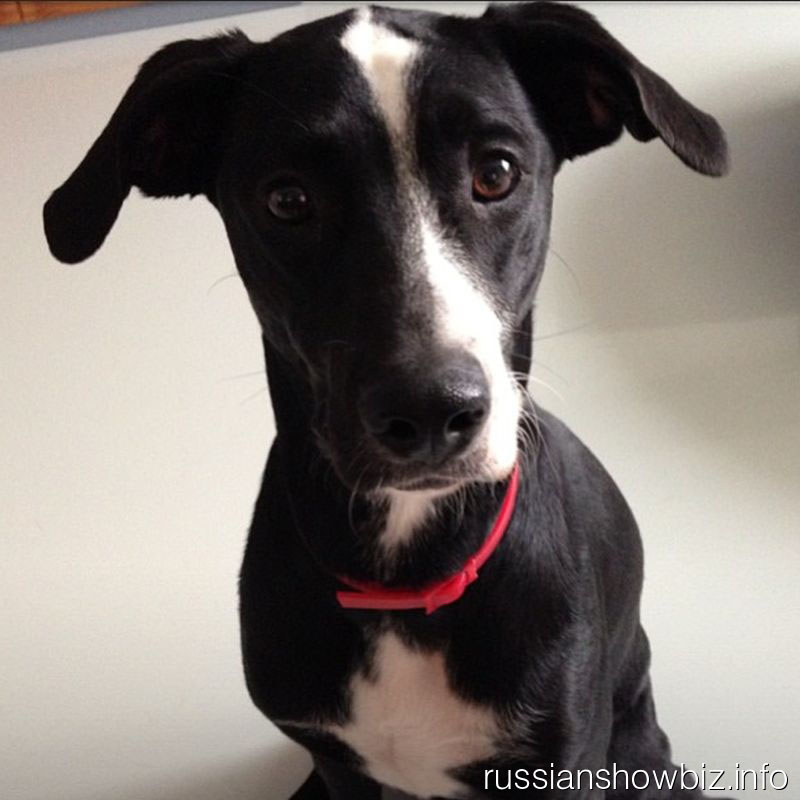 Собака Сергея Лазарева
