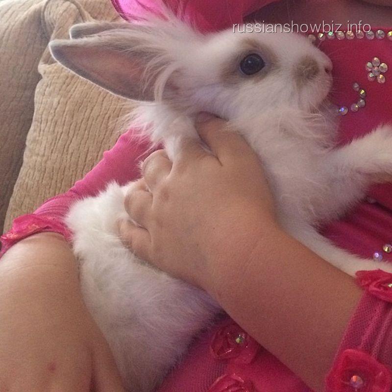 Кролик Алсу