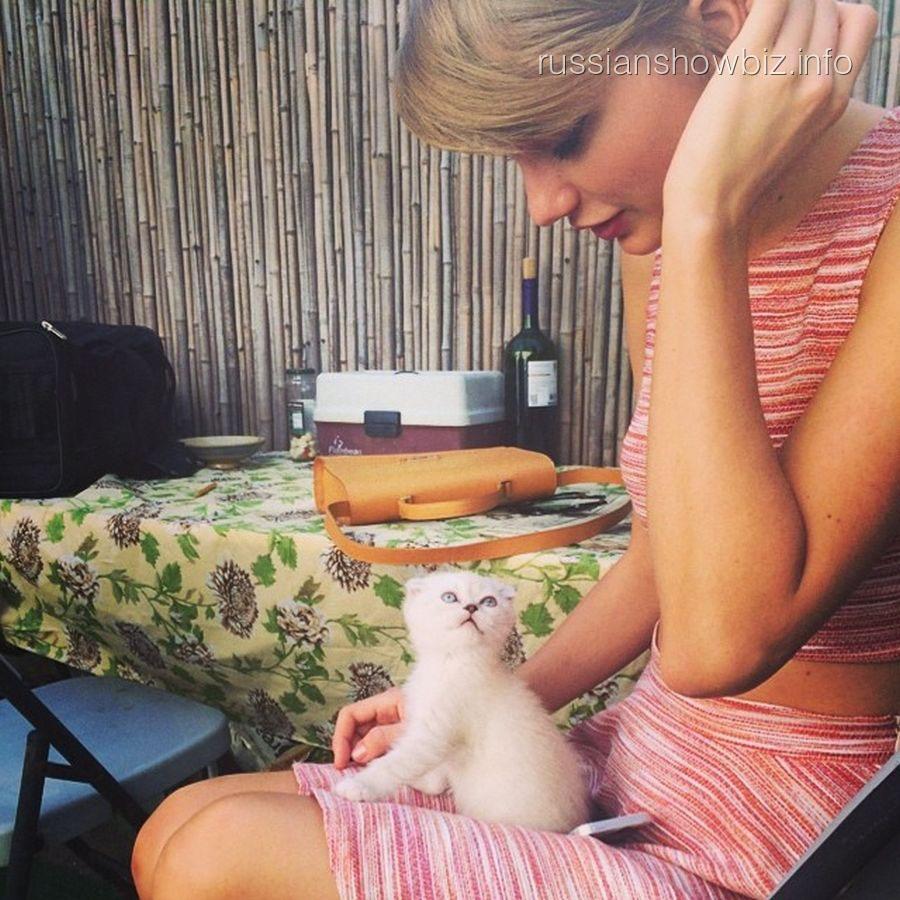 Тейлор Свифт с котенком