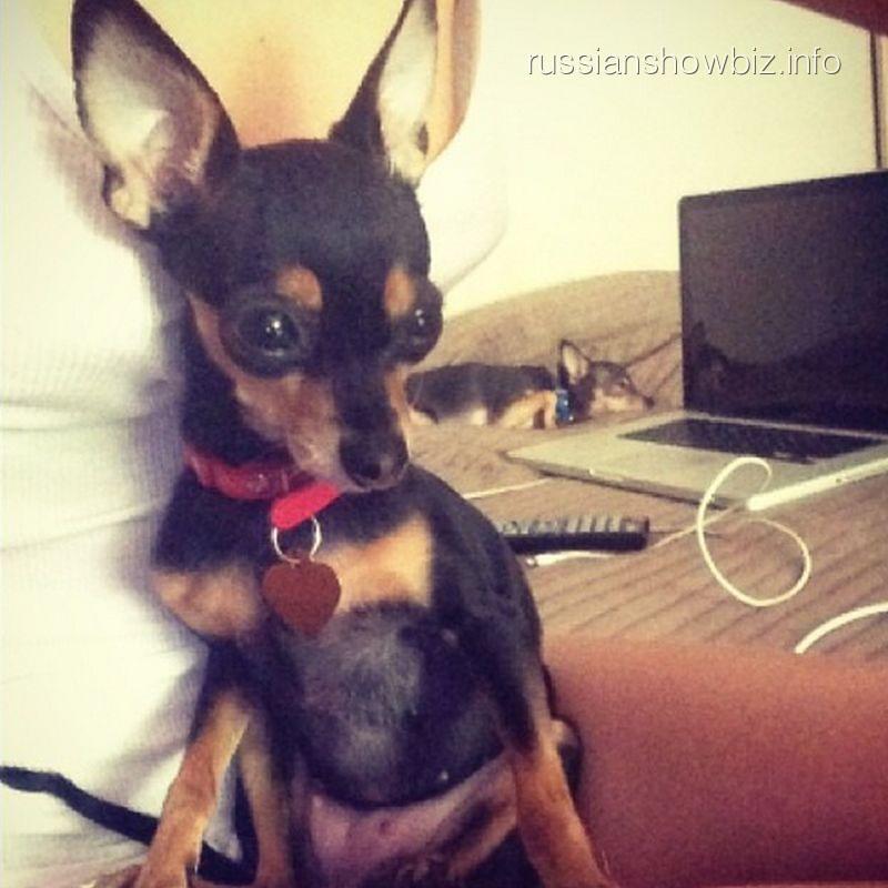 Собачка Натальи Рудовой