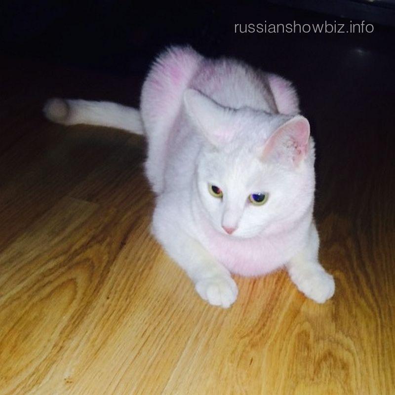 Розовая кошечка Лены Лениной