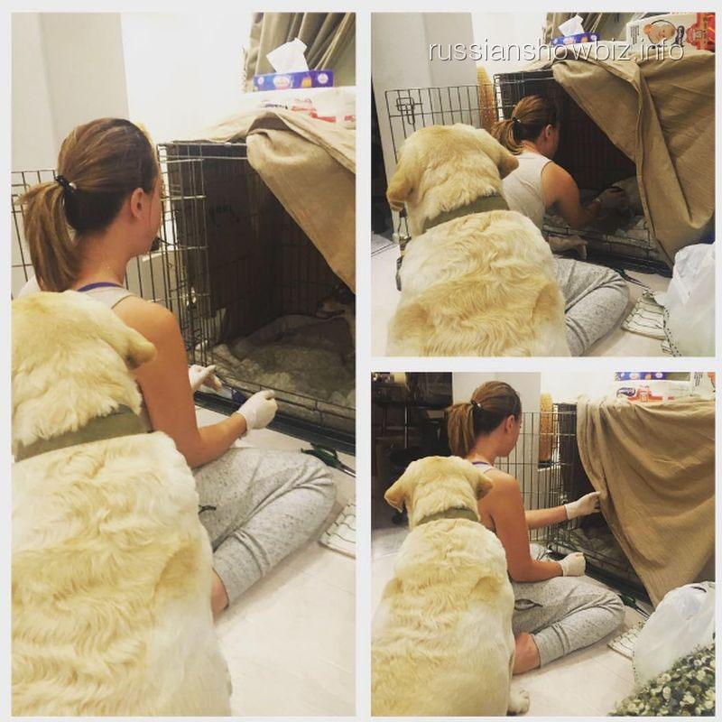Наталья Фриске приниает роды у собаки
