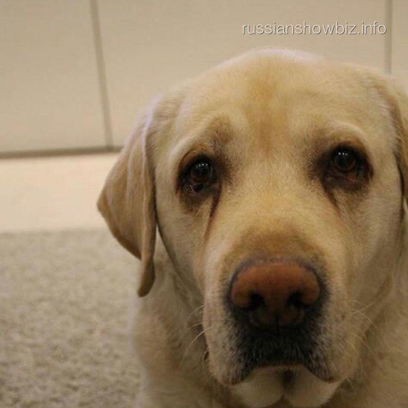 Любимый пес Жанны Фриске